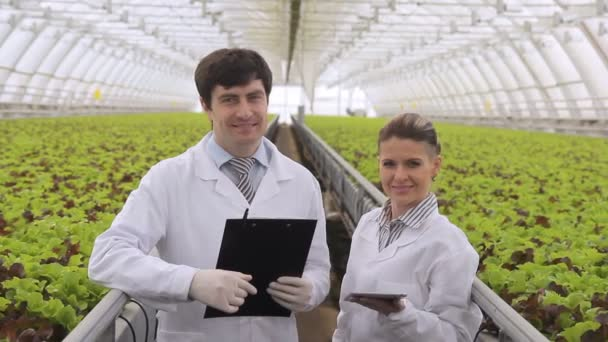 Workers woman man doing Permanent complex diagnostics of lettuce