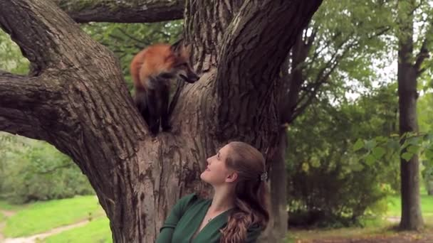 female hostess walking fox in park outdoors. red, wild pet sitting