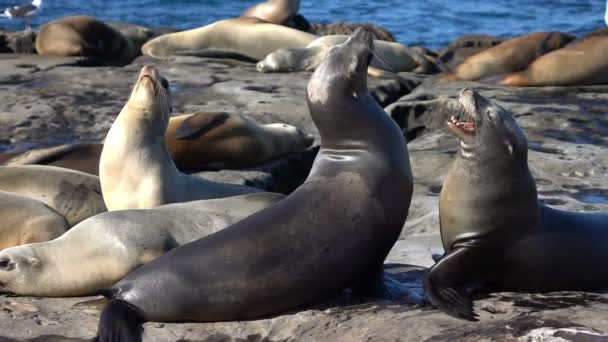 Two videos of group of seals in real slow motion
