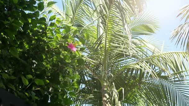 Videó a hibiszkusz virágok és Pálma levelek 4k