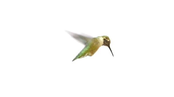 Video z opravdových hučení ptáka s Alfa podkladu
