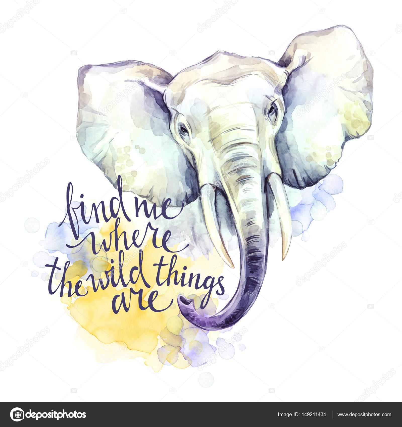 Imágenes Elefantes Con Frases Elefante Acuarela Con La