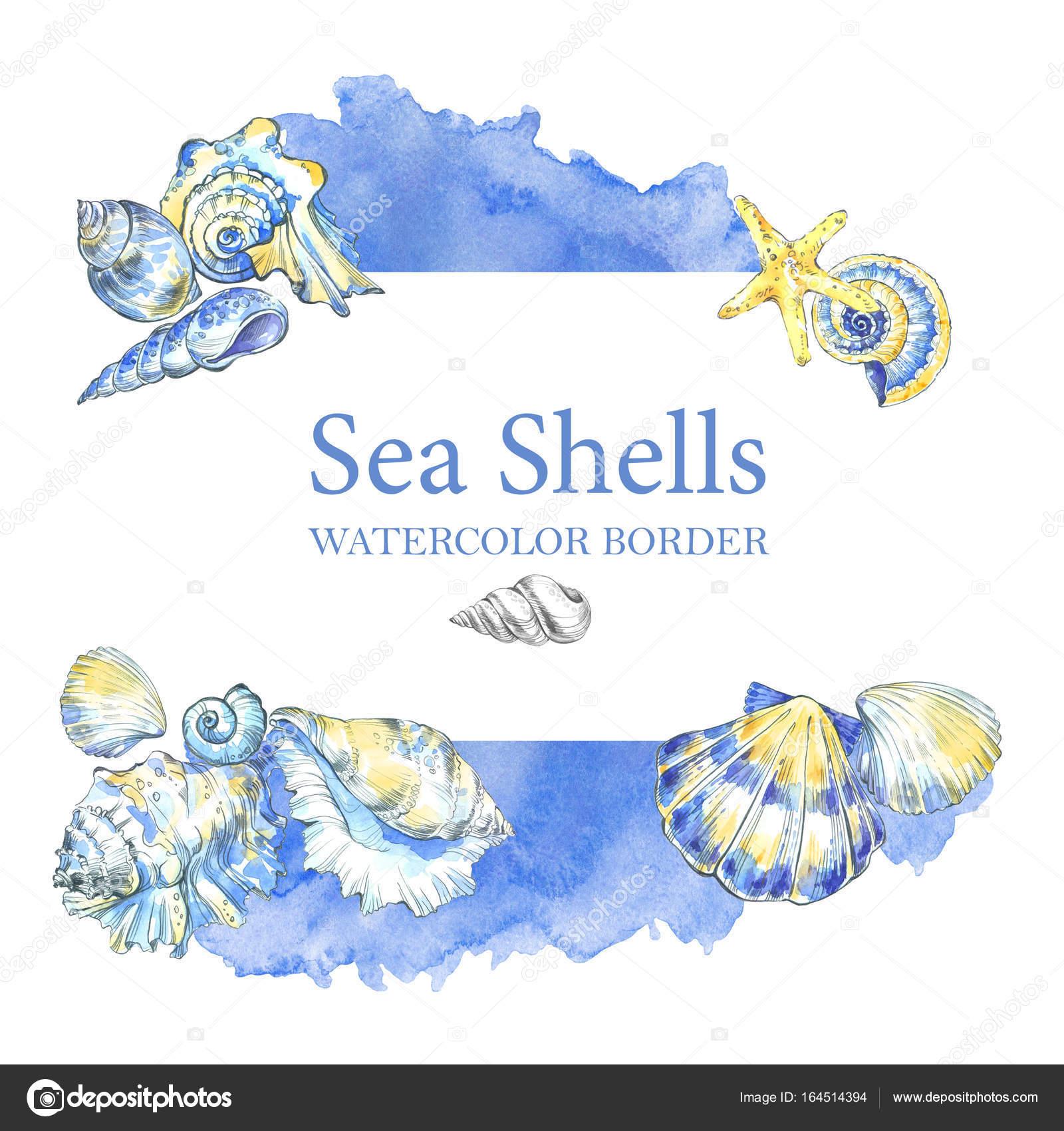Hand Painted Seashells Border Watercolor Decorative