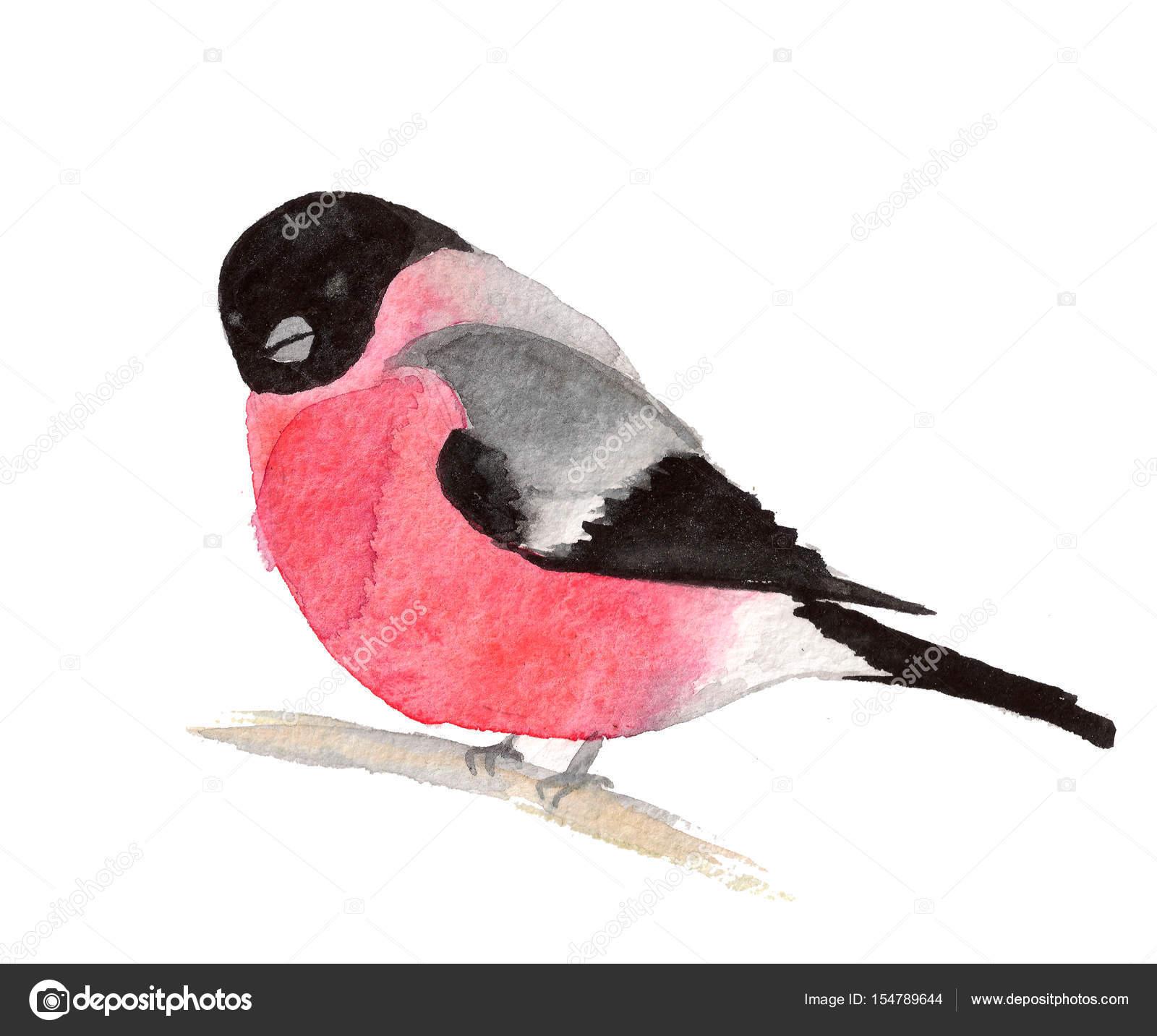 Ptak Gil Akwarela Zdjęcie Stockowe Milache 154789644