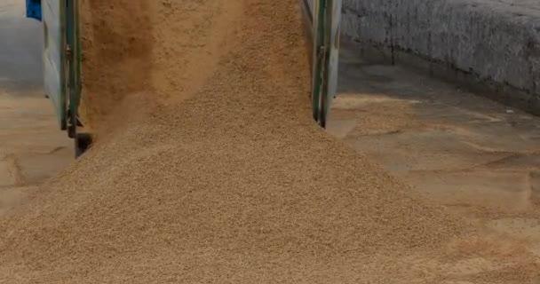 Drtící jeřáb vykládá a nakládá kukuřičné krmivo z náklaďáku v přístavu, venku. Hromadný náklad jídla. Logistika. Transport. Gantry-jeřáb. Zpomalený pohyb