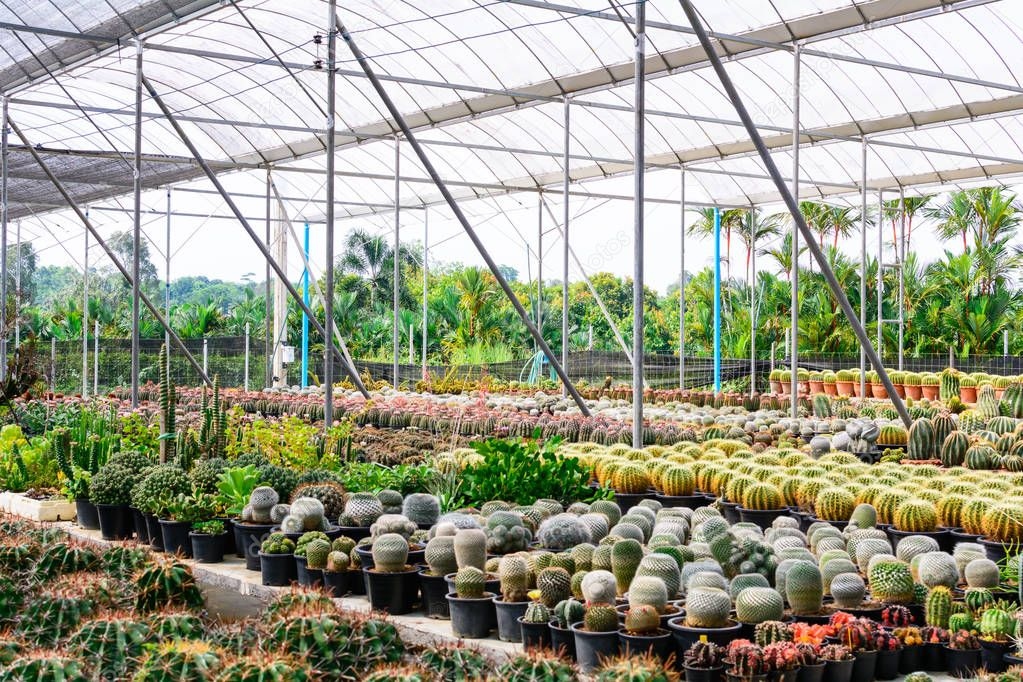 Cactus tree shop with breeding in the house for sale