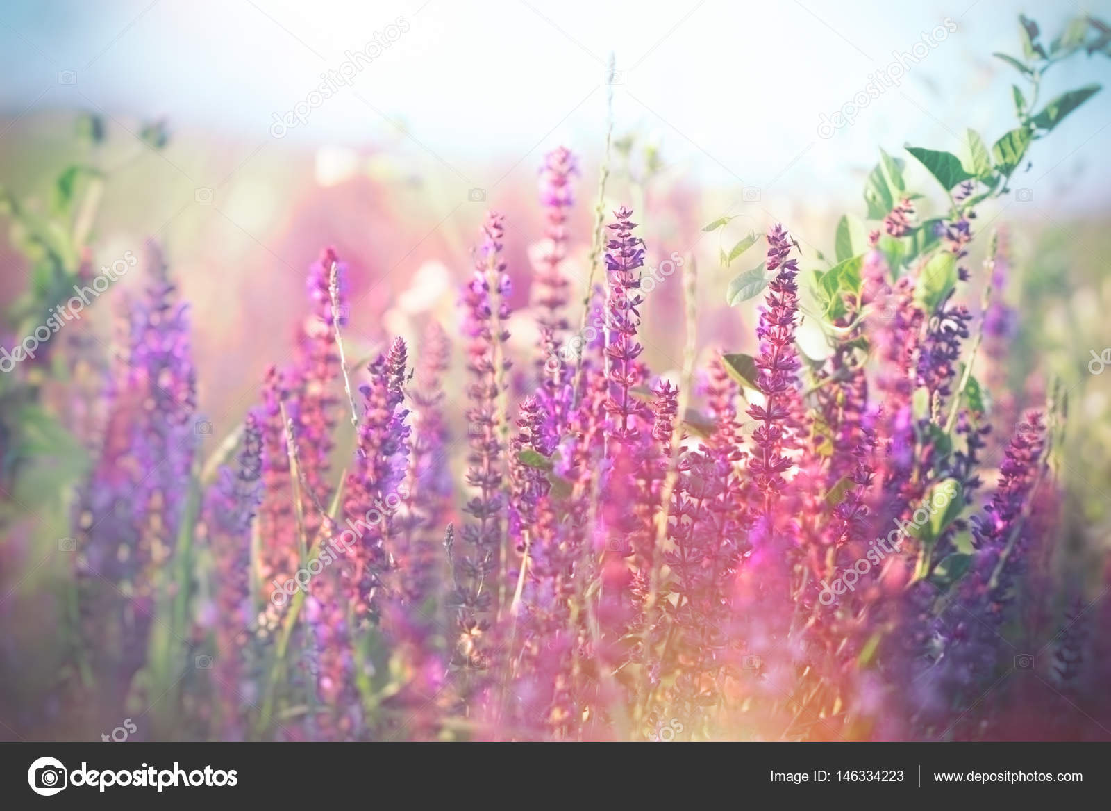 Soft focus on purple flowers in meadow beautiful nature in spring beautiful meadow in spring flowering purple flowers photo by lola19 izmirmasajfo