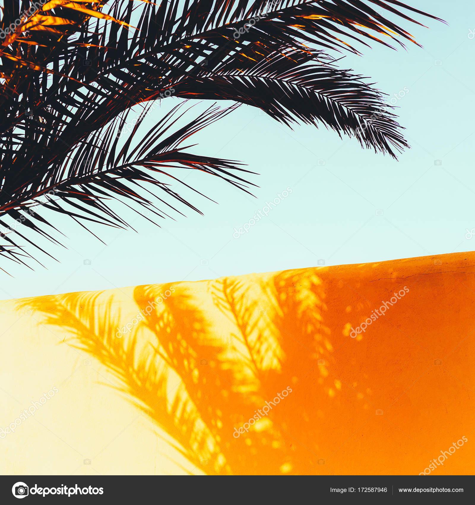 Palm. Shadow on the wall. Minimal art. Tropical mood — Stock Photo ...