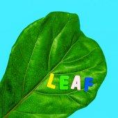 Photo Leaf Art. Green. Flat lay minimal
