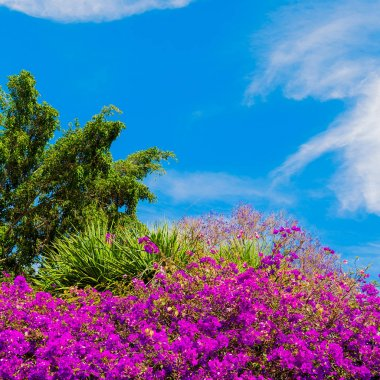 Flowers. Bloom. Canary Islands Tropical vibes