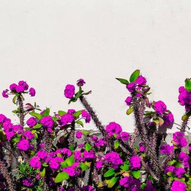 Fashion minimal bloom. Tropical flowers