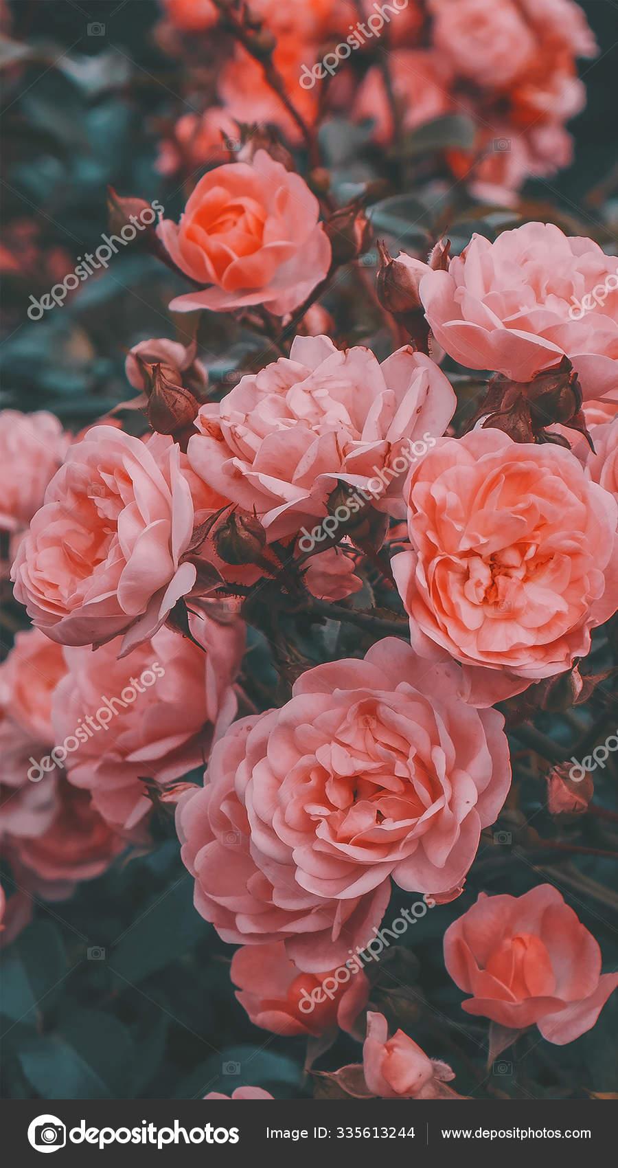 Fashion Aesthetic Wallpaper Phone White Flowers On Black Background Stock Photo Image By C Porechenskaya 335613244