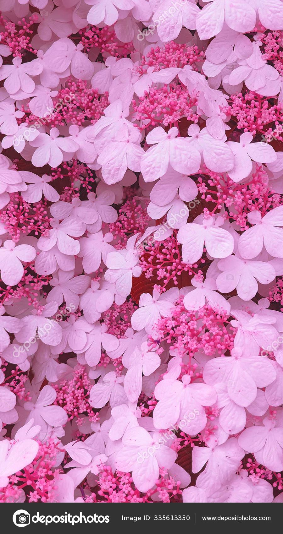 Fashion Aesthetic Wallpaper Phone White Flowers On Black Background Stock Photo C Porechenskaya 335613350