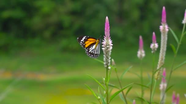zvíře a příroda, motýl na přírodním květu a animovat.