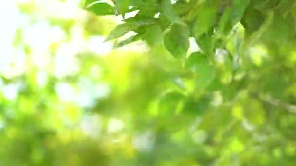 Příroda zelený list hýbat s přírodním větrem.