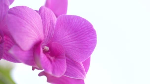 Detailní video orchidejí pohybujících se ve větru