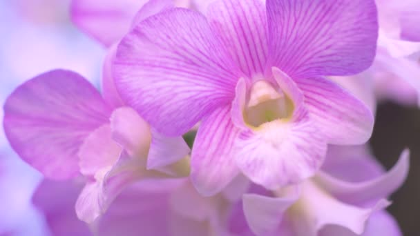 Close-up video of orchids Moving in the wind