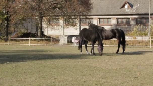 Horses Pan Shot