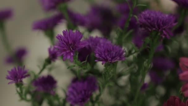 Květy kolem hnutí