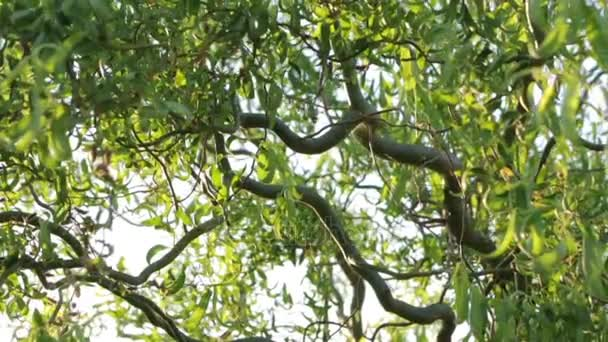 Rami contorti di un albero