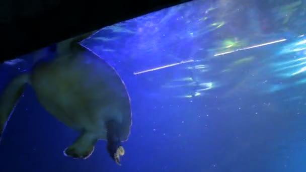 THe Sea Turtle Swims