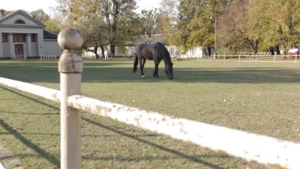 Graues Pferd Dolly Schuss
