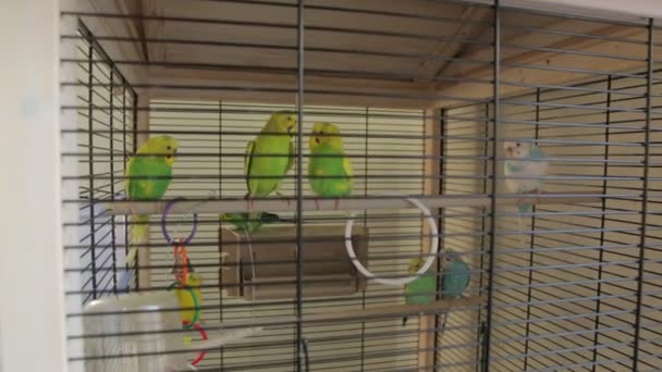 The Green Parrots Cage