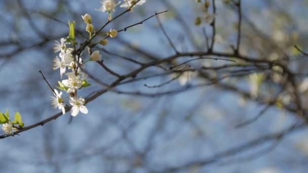 Větev bílého květu