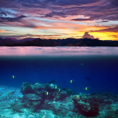 fish in tropical ocean during beautiful sunset