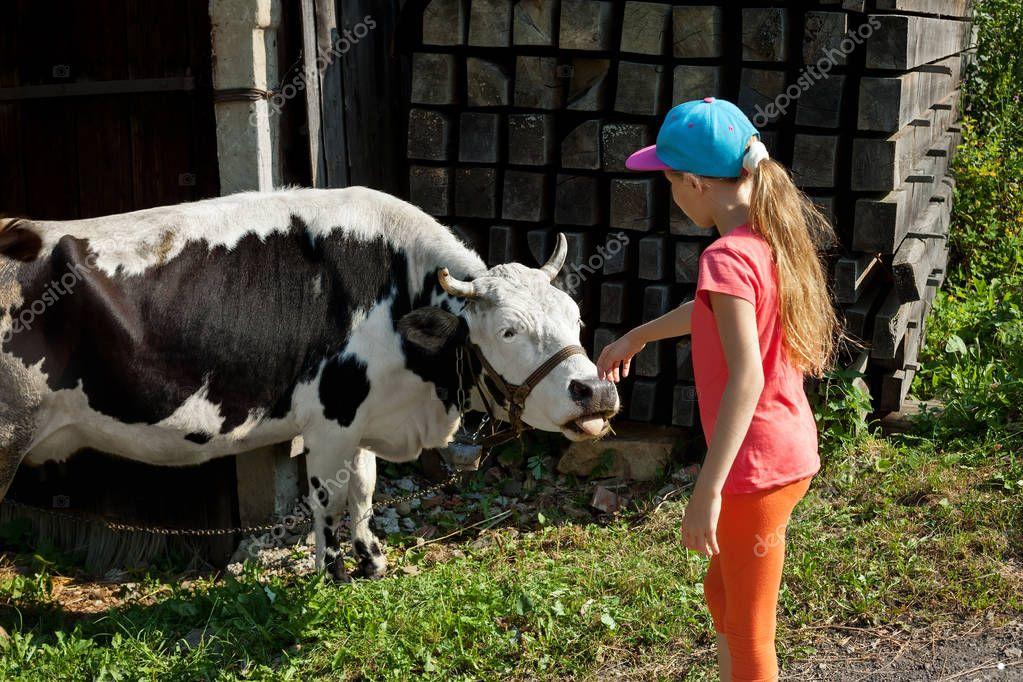Little girl stroking cow