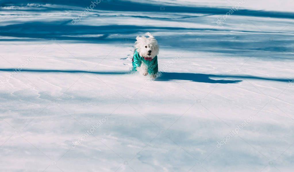dog running in snow on winter park