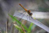 Dragonfly chystá fly-2