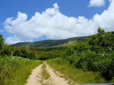 Rota Jungle Road