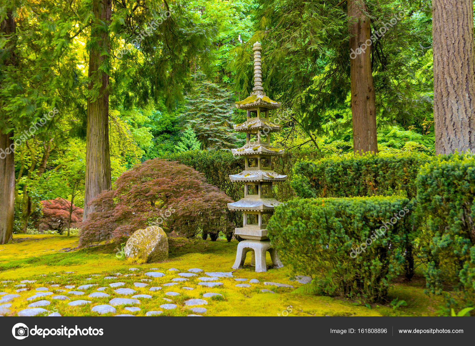 Japanese Garden With Japanese Maple, A Stone Pagoda Lantern And Evergreen  Trees. U2014 Photo By Alabn
