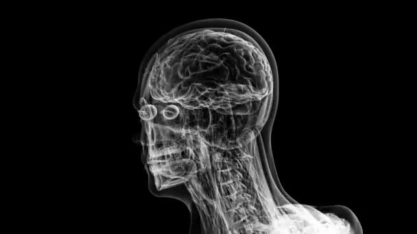 Human anatomy  The anatomical model of a human head is rotated around its  axis on black background  Loop animation