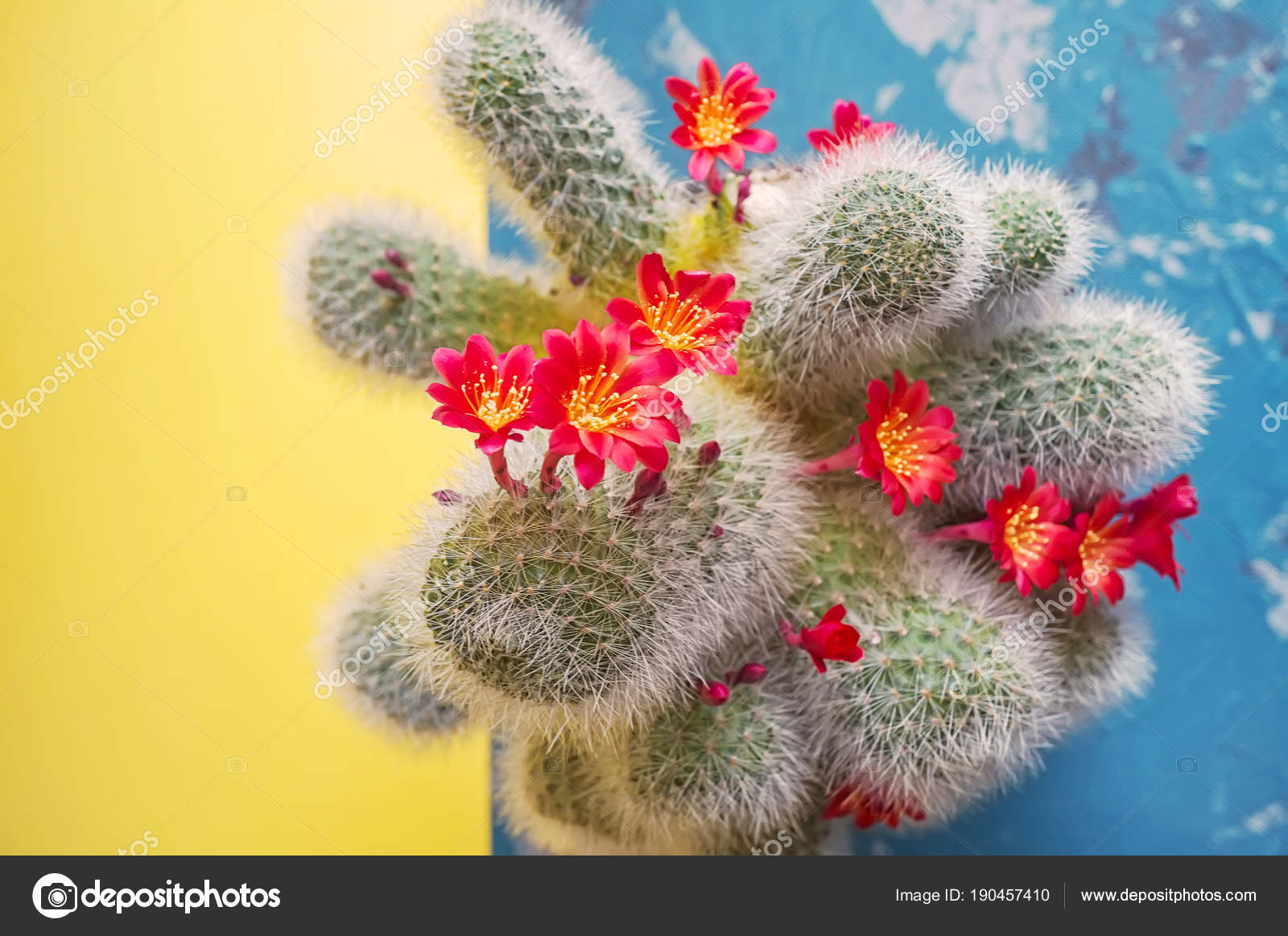 Ball Cactus With Lots Of Red Cactus Flowers On Dichotomous Yellow