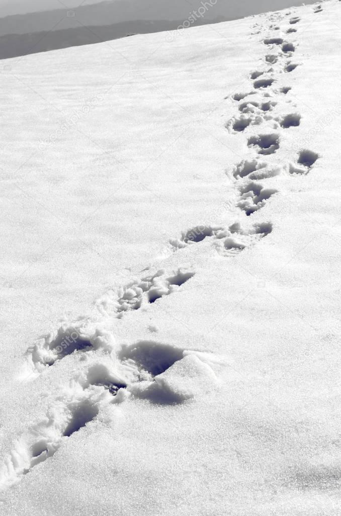 Steps in the snow on the mountain