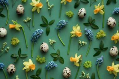 Easter arrangement with muscari, daffodils, green leaves and quail eggs on green background. View from above. Flat lay.