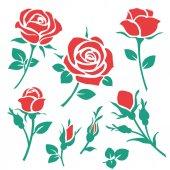Dekoratív piros rózsák csoportja