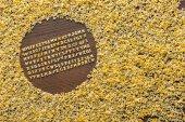 Fotografie macaroni alphabet letters