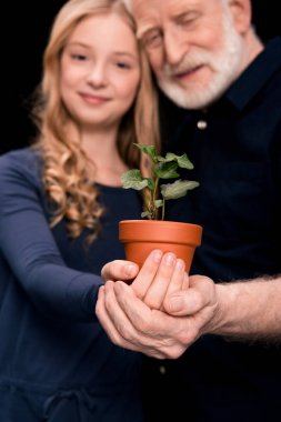 grandfather and granddaughter with ivy plant