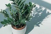 Hrnková rostlina v bílé váze