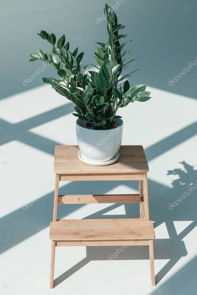 potted plant in vase on flower stand