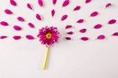 Fotografie růžový květ a lístky
