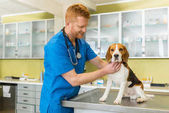 Photo veterinary examing dog
