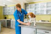 veterinární kontrole pes