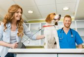 Photo Woman with her dog at veterinary
