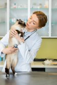 Ausculting veterinario gatto con lo stetoscopio