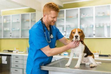 veterinary examing dog