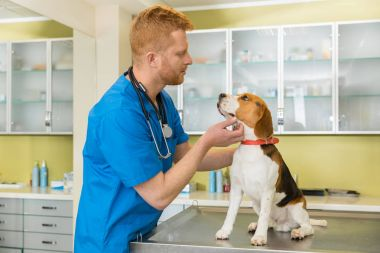 veterinary examing dog